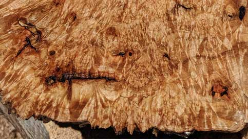 Highly figured burl slab